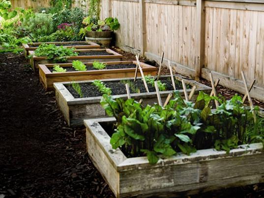 Como fazer uma horta em casa11