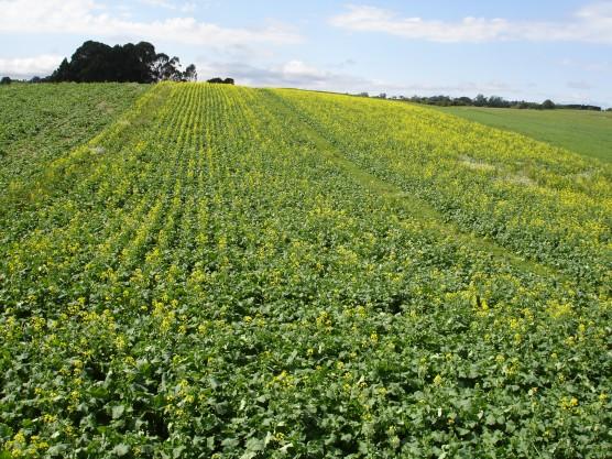Curso Técnico Gratuito de Agroindústria