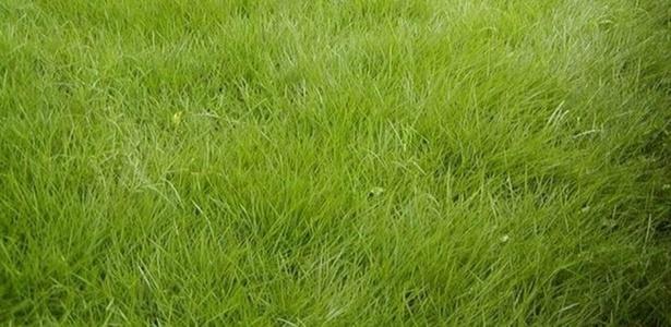 Principais tipos de grama