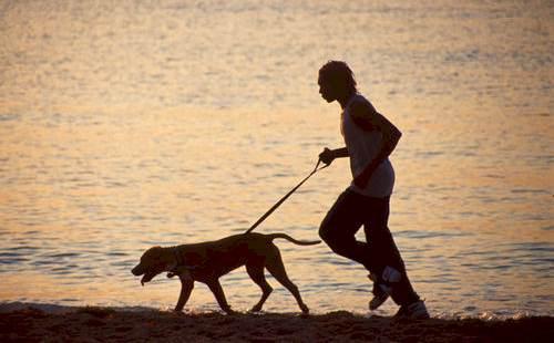 Não deixe o cachorro solto na areia da praia (Foto: Divulgação)