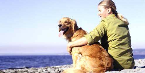 Cachorro na praia não é bom (Foto: Divulgação)