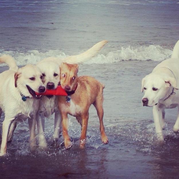 Cachorros na praia (Foto: Divulgação)